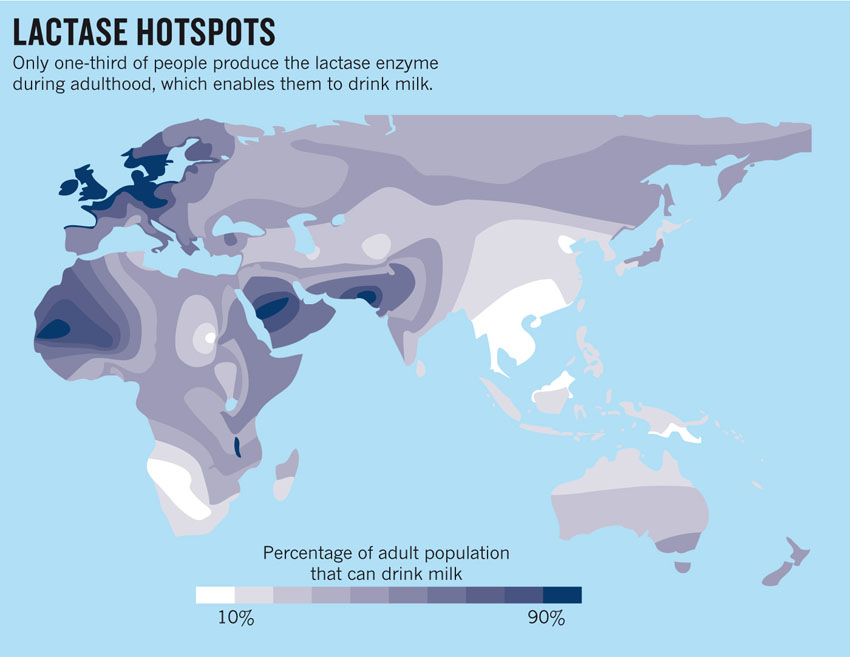 Distribution of lactase globally